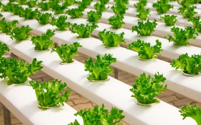 Problems of Agriculture and Advantages of Hydroponics